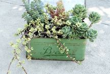 I'm in love with Succulents. It's true. / Because I love succulents. Possibly because I can't kill them.