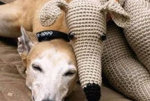 greyhounds / In loving memory of Chase...