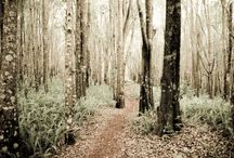 Into the Woods / Trees, Trees, Trees