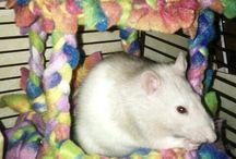 Rat ^.^