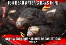 NJ Bear Kill  Trophy Hunt / NJ Bear Kill is the yearly extermination of bears in North Jersey.