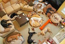 Doggies make life better :) / by Kara Schroeder