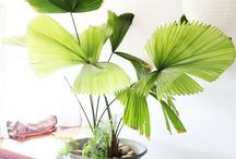 Botanic Love & Feel