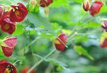 Gardening / by Julie Evoy