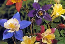 Flowers / by Jennifer Mirabella
