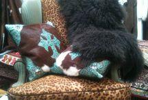 Western pillows