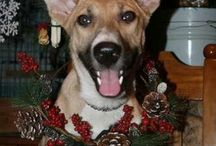 Holidays & Pets / Come see fun holiday pet pictures and costume ideas for your animals