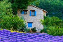 Lavender fields, Provence / by Andrea Molloy