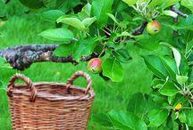 Garden - visits (besök hos andra)