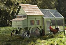 Chicken Coops / by HomeScape Stagers