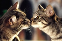 Cats / by Mariah Keren
