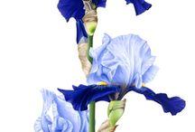 рисунки для проекта ботанический сад
