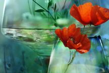 Colours! / by Barbara Mattioli