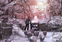 Crăciun roz
