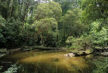 Kalimantan barat (pontianak) indonesia