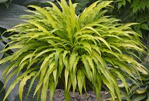 The best Hostas / Hostas are great perennials. Some are good but some the best.