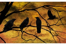 Crows and Friends
