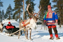 Reindeer rides / Feel like a Sami in the old days travelling through the snowy forest of Lapland on a reindeer sledge