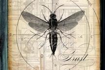 Vieilles planche / Insectes,etc