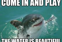 friendly sharks