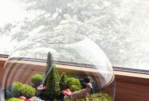 Forest Terrarium Ideas