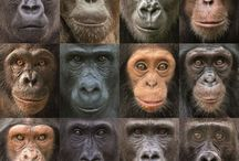 Just monkeys