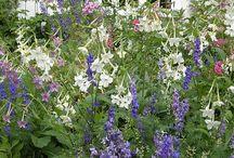 beautiful garden and flower ideas