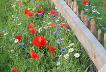 Beautiful gardens / Garden ideas