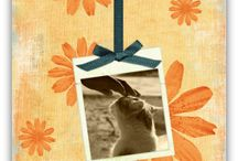 Cat Sympathy Cards / A collection of cat sympathy cards. / by Simple Sympathy