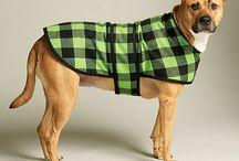 Dog Coat!