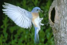 Love Beautiful Birds / by Alisa Galloup-Soderstrom