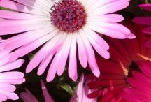 flores natu