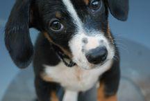 Bleu / Dogs zijn heel cute