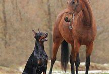 Kutya és ló