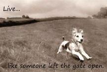 Pets / by Rhoda Gardner