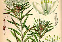 Herbal remedies / by Amber Therrien