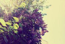 Твинкл / Растения из моего окружения ;)