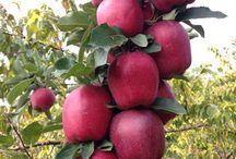 Korkmaz Garden / Tüm meyve sebze ürünlerimiz