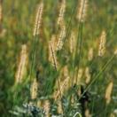 Gardening: Annual Weeds / by Jaci Smeltzer