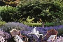 jardines / jardines flores y plantas