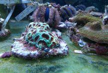 Importy korali