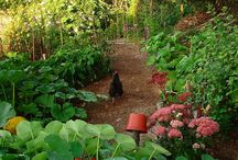 Permaculture / Living in harmony / Self sufficiency / Permaculture and organic solutions, vegetable gardening and preserving.