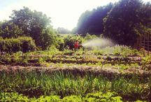 #RuralLifestyle / Vida diaria en el rural.