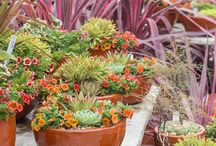† Succulents †