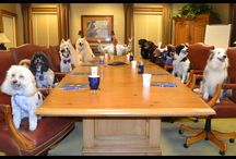 National Dog Day / We love when customers visit us at our branches – especially our four-legged ones. To celebrate National Dog Day, we asked our bankers to capture these special visits.