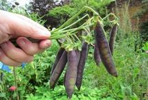 I grow peas