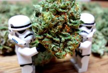 OMD Cannabis Toy Photography / Sometimes at Online Marijuana Design we like to photograph...with toys!