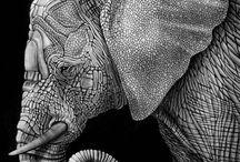 Ink illus- elephant
