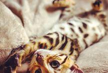 kitties / by Camille Rowe