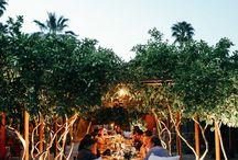 Palm spring
